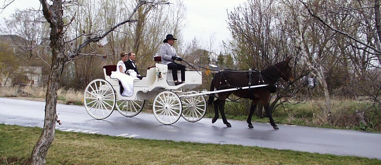 Training Horses and Mules